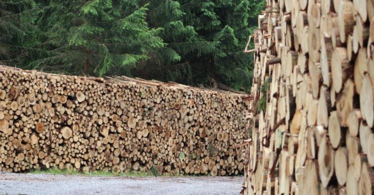 PIGPD I Polska Izba Gospodarcza Przemysłu Drzewnego I drewno